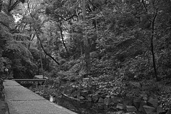 a path along the brook (avawoodworth) Tags: nature field woods water river tree tokyo japan sigma dp dpquattro dp2 slowshutter bw blackandwhite monochrome morning mono