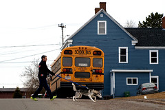 0009051 (To all that visit, Thank you) Tags: dog man walking school bus house leash dukestreet westsaintjohn saintjohn saintjohnnb nb nbphoto canada ©allrightsreserved