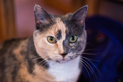 Mom's kitty- Sally (Christy Turner Photography) Tags: