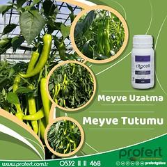 profert bbir (Profert Gübre) Tags: biber bitki bitkikoruma fertilizer profert