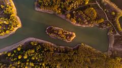 Island in the River Po (Olmux82) Tags: island river po italia italy spring tree dji mavic air landscape paesaggio emilia romagna color colors