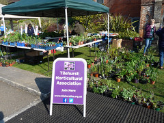 Tilehurst Horticultural Association at Bean Pole Day, April 2019 (2) (karenblakeman) Tags: caversham uk april 2019 beanpoleday cavershamcourtgardens tilehursthorticulturalassociation tha plants seedlings reading berkshire