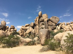 Day 9: Joshua Tree National State Park (Probee) Tags: day 9 joshua tree state park california usa the grand tour july 2017 skull rock