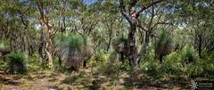 Myall Lake National Park (Dreamtime Nature Photography) Tags: myalllakenationalpark nsw newsouthwales australia beach ocean plage mer canon landscape paysage dreamtimenaturephotography forest