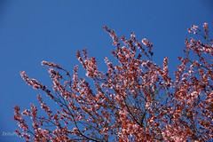 (Zeituhr) Tags: zeituhr spring frühling wald