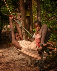 Swingers (Rod Waddington) Tags: africa afrique afrika madagascar malagasy culture cultural child children swing swinging tree group outdoor village
