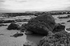 Bulots (Spotmatix) Tags: 1685mm beach camera effects france hautsdefrance k5iis landscape lens monochrome pentax places seaside wissant zoomstd