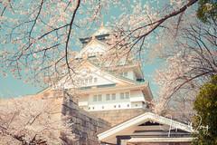 Osaka - Osaka Castle Park (8) (ジェイリー) Tags: osakacastlepark 大阪 osaka japan sakura daylight 大阪府 さくらの名所100選 桜 植物 開花 景深 樹 櫻花 粉色 花 戶外 安詳 圖案 生物型態