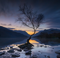 Sunrise Tree (gmorriswk) Tags: caernarfon wales unitedkingdom sunrise lone tree llanberis north llyn padarn lake snowdonia national park calm serene peaceful morning sky clouds reflection reflections mountain mountains still long exposure