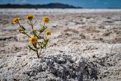 IMG_0168 (jde95tln) Tags: carrizo plain national monument super bloom 2019
