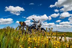 IMG_0155 (jde95tln) Tags: carrizo plain national monument super bloom 2019