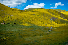 IMG_0139 (jde95tln) Tags: carrizo plain national monument super bloom 2019