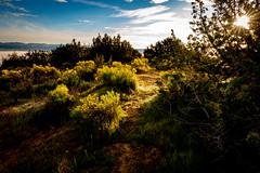 IMG_0089 (jde95tln) Tags: carrizo plain national monument super bloom 2019