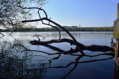 Copy of CSC_1078 (LMW76) Tags: kings mill reservoir sutton ashfield mansfield nottinghamshire spring april 2019 sunny water reflection tree branch hospital blue sky