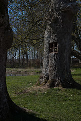 Tree Living (Rind Photo) Tags: tree window composition afmicronikkor55f28 rindphoto clauschristoffersen knivholt denmark beautiful imagination