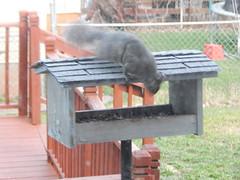 DSCN1677 (mestes76) Tags: 050718 duluth minnesota backyard birdfeeders squirrels