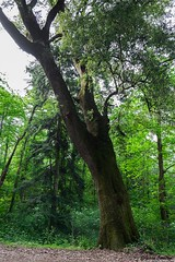 (Giada Cortellini) Tags: trees alberi wood nature naturephotography lazio italia italy canon landscape