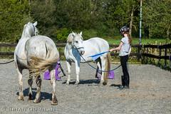20190419-BQ__4293.jpg (brian.quinlan) Tags: athertonoldhallfarm horses salty animals buffy people aimee