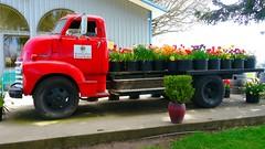 2019 Wooden Shoe Tulip Festival (Rick Obst) Tags: woodenshoetulipfarm