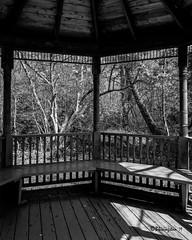 Gazebo (Bruce Livingston) Tags: hff trees hunterdoncountyarboretum nj newjersey monochrome bw blackwhite