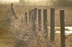 Wireless (faithroxy) Tags: bokeh fence wireless fencepost hff spring field farm alberta evening canada