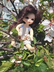 Life in a Tree (Emily1957) Tags: light naturallight nikon kitlens dolls doll toys toy floweringcherrytree pukipukiante iphone