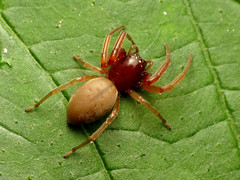Spider (treegrow) Tags: rockcreekpark washingtondc nature lifeonearth raynoxdcr250 arthropoda arachnida araneae spider