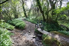 IMG_9196 (Photopedaler) Tags: cornishcycling fatbike fatbiking bridleways streams countryside mountainbiking
