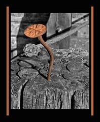 Le clou de la galerie (Terra Pixelis) Tags: nikond810 alsace hautrhin 68 clou bois fer rouille écomusée ungersheim forge
