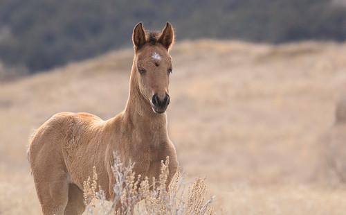 Foals fan photo