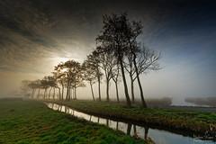 Sunrise Trees (Johan Konz) Tags: sunrise moody sky cloud tree silhouette landscape outdoor purmerland waterland netherlands nikon d7500 grass field water rural road lines reflection