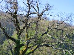 IMG_0001x (gzammarchi) Tags: italia paesaggio campagna natura montagna palazzuolosulseniofi lafaggiola valicodelparetaio albero quercia