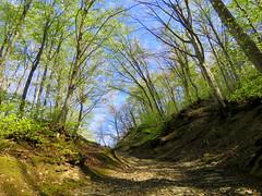 IMG_0049y (gzammarchi) Tags: italia paesaggio campagna natura montagna palazzuolosulseniofi lafaggiola valicodelparetaio strada sterrato bosco