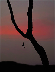 Sunset in Assynt (McRusty) Tags: horseshoe bat sunset colour tree silhouette north west highland scotland beautiful natural outdoor