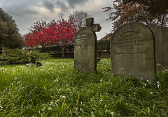Colour in a solemn place (Through Bri`s Lens) Tags: sussex broadwatercemeteryworthing brianspicer canon5dmk3 canon1635f4