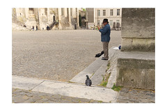 audiance of one (1957 flâneur) Tags: musician trumpeter pigeon avignon france streetphotography