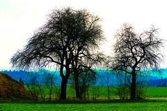 Bizarre Landschaft (GerWi) Tags: landschaft landscape weitwinkel ww bizarr lumix fz1000 panasonic bäume trees rasen grün blau hellblau himmel sky natur raila