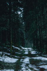 The Black Forest (davidffeal) Tags: forest nature bosque winter snow nieve dark invierno trees
