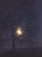 4-18-19 (ms_shell) Tags: iphone night tree moon 365project project365 2019