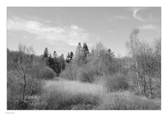 Trees & Clouds (Michael Fleischer) Tags: spring trees clouds sky branches reaching blackwhite monochrome sunshine contrast detail forest sigma 28mm f14 art