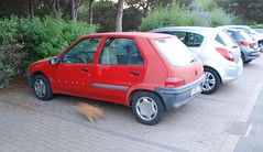 106 + a ginger cat (Sam Tait) Tags: menorca 2013 spain car spotting spot retro rare old classic peugeot 106 red 5 door hatchback