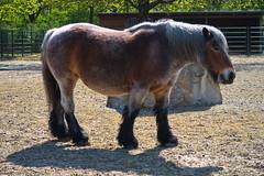 20.04.2019 11-47-4200 (TheFan1968) Tags: berlin tierpark friedrichsfelde tier pferd