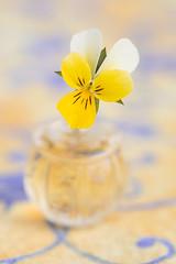 still-life 21-04-2019 026 (swissnature3) Tags: stilllife macro flowers flacon