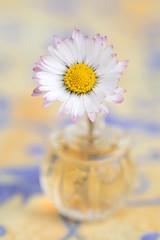 still-life 21-04-2019 025 (swissnature3) Tags: stilllife macro flowers flacon