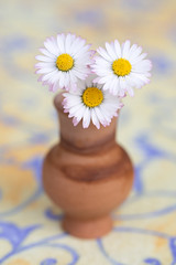 still-life 21-04-2019 022 (swissnature3) Tags: stilllife macro flowers flacon