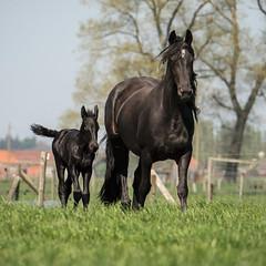 Mum & son in the sun (Drummerdelight) Tags: captiveanimals horses lowpov