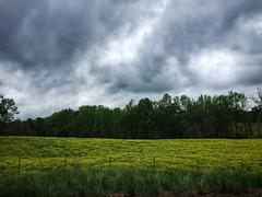 Georgia Countryside