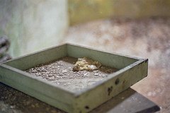 Best_Eastern State Pen_0419_11 (mizzbritta) Tags: philly philadelphia 2019 nikon 35mm filmphotography film usa easternstatepenitentiary prison