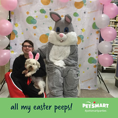 Happy Easter (Vinny Gragg) Tags: store stores dog dogs puppy pup canine puppies animal animals chonzer miniatureschnauzer miniature schnauzer bichonfrise bichon frise fonz fonzie costume costumes cosplay joliet illinois jolietillinois willcounty superheroes superhero comics comicbooks comicbook villian villians supervillian supervillians holiday holidays easterbunny easter bunny balloons balloon petsmart rabbit rabbits