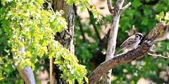 J78A0001 (M0JRA) Tags: rspb blacktoft sands birds flying people ponds lakes trees walks